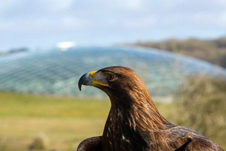 Eagle and botanic garden-2